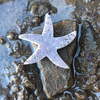 Stones from Uruguay - Druzy Seastar  for Jewelry Making - Druzy Starfish Shaped Cabochon -  Wire Wrapped Jewelry